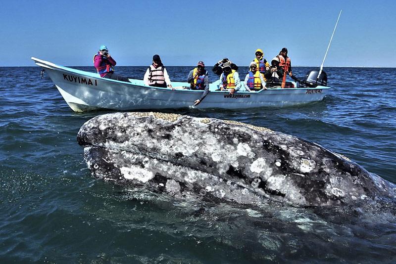 Tours en La Paz BCS: una experiencia en el pequeño corazón del Mar de Cortés